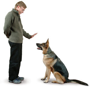 dog-training-12.298144045_std[3]